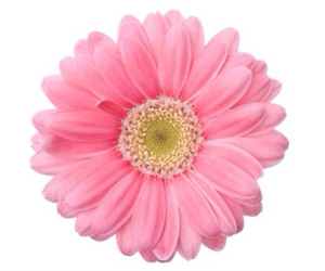 flowers, pink, and overlay image