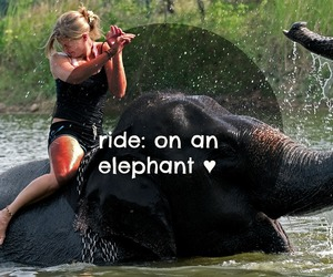 beautiful, before i die, and elephant image