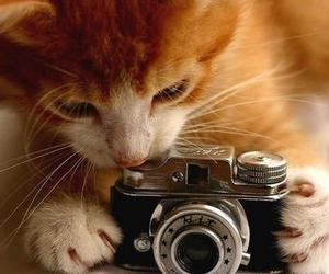 cats, photography, and cute image