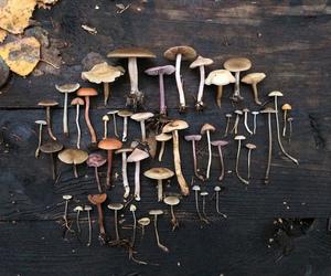 fungi