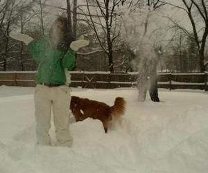 dog, pretty, and snowday image