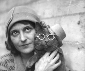 cat, hat, and glasses image