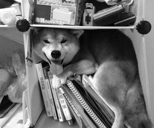 black and white, books, and cute image