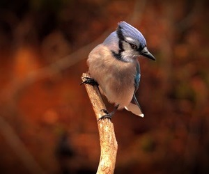 aves, bird, and blue image