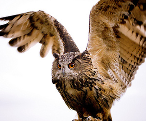 fly and owl image