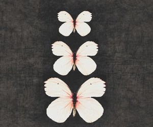 black, butterfly, and combination image