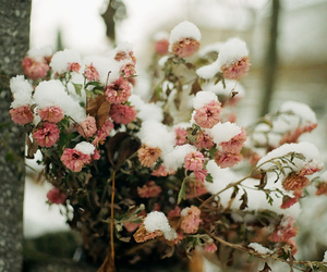 flowers, snow, and winter image