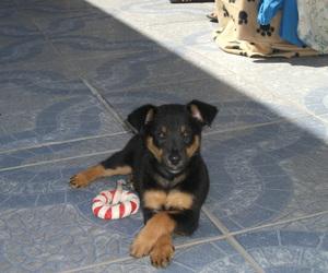 bella, sweet, and dog image