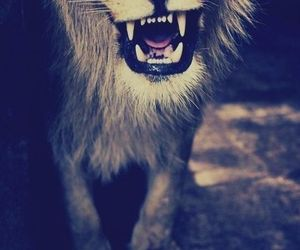 lion and roar image
