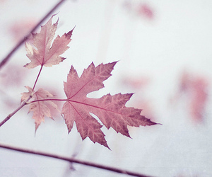 autumn, bokeh, and leaves image
