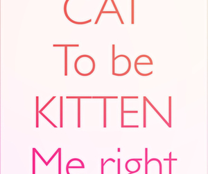 cats, inspiring, and kittens image