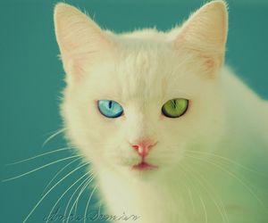 cat, blue, and green image