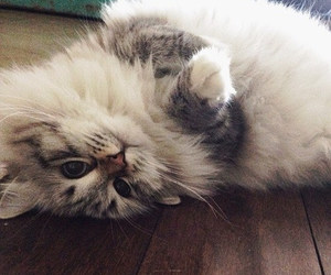 adorable, animals, and kitty image