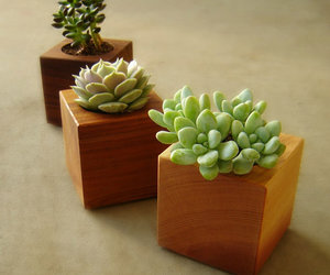 succulents, modern, and plants image