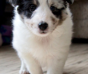 puppy, animal, and cute image