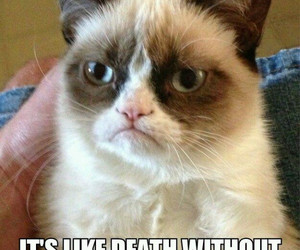 cat, death, and funny image