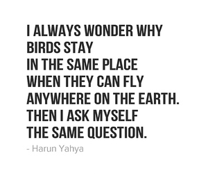 birds, question, and quotes image