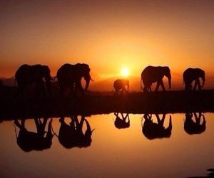 elephant, nature, and nice image