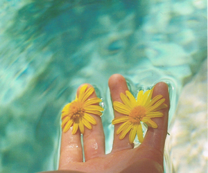daisy, summer, and yellow image