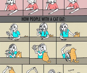 cat, funny, and eat image