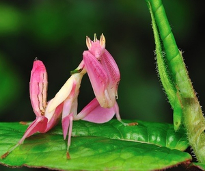 cool, orchid, and insect image