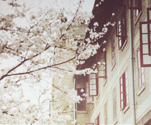 flowers, blossom, and house image