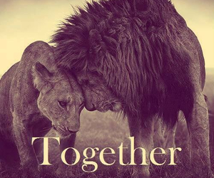love, together, and animal image