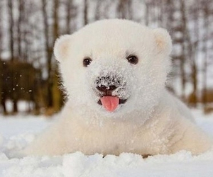 bear, snow, and Polar Bear image