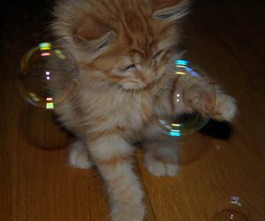 beautiful, bubbles, and cat image