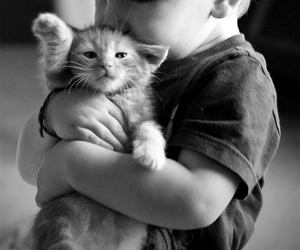 cute, cat, and baby image