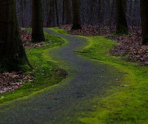 forest, green, and leaves image