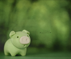 bokeh, pigs, and project 365 image