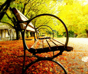 bench, autumn, and fall image