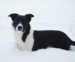 animal, border collie, and collie image