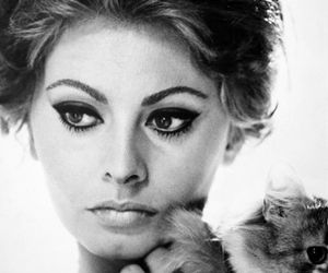 sophia loren, cat, and beauty image