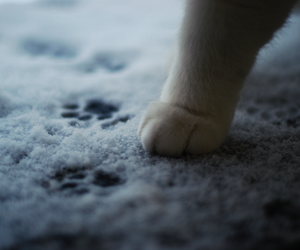 cat, paw, and snow image