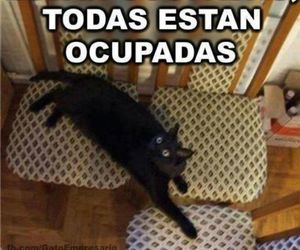 cat, funny, and divertido image