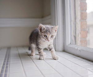 kitten and separate with comma image