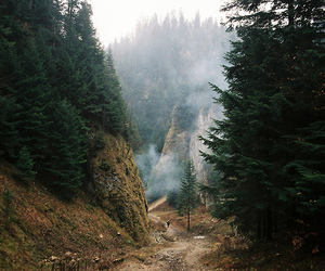 forest, mountains, and tree image