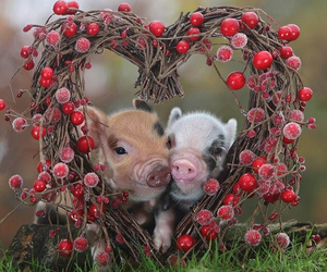 pig, animal, and heart image