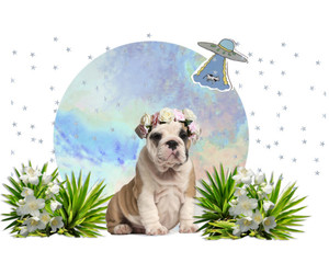 dog, tropical, and my edit image