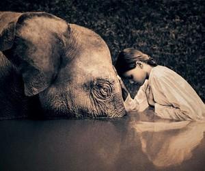 elephant, peace, and girl image