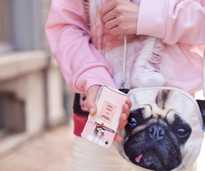 bag, fashion, and puppy image