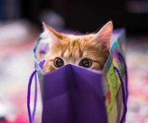cute, bag, and cat image