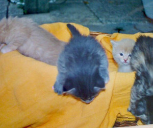 kittens, cute, and small image