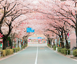 pink, japan, and beautiful image