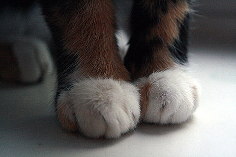 cat, foot, and kitten image