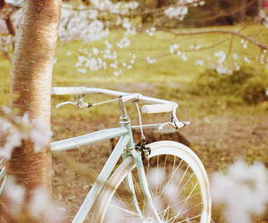bike, flowers, and bicycle image