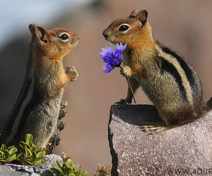 animal, squirrel, and flowers image