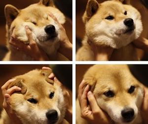 dog, style, and marutaro image